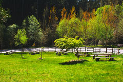Λέιζερ και υποτροφία πάρκων στη μέση της φύσης κατά μήκος του δρόμου. Στοκ Εικόνα