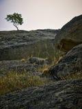 Μόνο δέντρο Στοκ Εικόνα