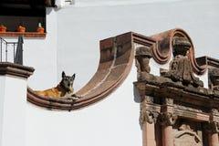 λήψη ήλιων σκυλιών Στοκ φωτογραφίες με δικαίωμα ελεύθερης χρήσης