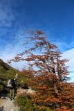 Λήψη κατά την άποψη Torres del Paine στη λίμνη National πάρκων Στοκ Φωτογραφίες