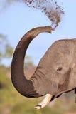 λήψη λάσπης ελεφάντων λουτρών Στοκ Εικόνες