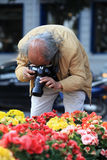 Λήψη της φωτογραφίας των ζωηρόχρωμων λουλουδιών Στοκ εικόνα με δικαίωμα ελεύθερης χρήσης