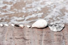 Λίγα κοχύλια θάλασσας που βρίσκονται σε μια σειρά στο φοίνικα Στοκ Φωτογραφία