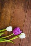 Λίγα πορφυρά και άσπρα λουλούδια Στοκ φωτογραφία με δικαίωμα ελεύθερης χρήσης