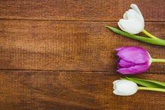 Λίγα πορφυρά και άσπρα λουλούδια Στοκ Εικόνα