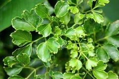 Λίγα πράσινα φύλλα στοκ εικόνες