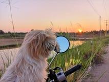 λίγα σκυλί και ηλιοβασίλεμα στον τρόπο στοκ εικόνα