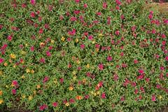 Λίγα τα λουλούδια Στοκ Φωτογραφία