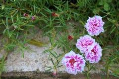 Λίγα τα λουλούδια Στοκ φωτογραφίες με δικαίωμα ελεύθερης χρήσης