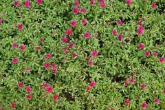 Λίγα τα λουλούδια Στοκ εικόνες με δικαίωμα ελεύθερης χρήσης