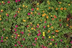 Λίγα τα λουλούδια Στοκ φωτογραφία με δικαίωμα ελεύθερης χρήσης