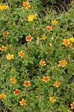 Λίγα τα λουλούδια Στοκ Φωτογραφίες