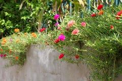 Λίγα τα λουλούδια Στοκ Εικόνες