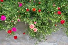 Λίγα τα λουλούδια Στοκ Εικόνα