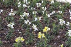 Λίγα φανταχτερά λουλούδια στο έδαφος Στοκ Εικόνες