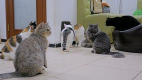 Λίγες γάτες που περιμένουν το χρόνο γεύματος απόθεμα βίντεο
