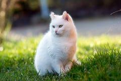 Λίγη άσπρη γάτα στον κήπο Στοκ φωτογραφία με δικαίωμα ελεύθερης χρήσης