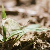 Λίγη άσπρη πεταλούδα Στοκ εικόνες με δικαίωμα ελεύθερης χρήσης