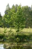 Λίγη λίμνη σε ένα δάσος Στοκ Εικόνες