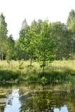 Λίγη λίμνη σε ένα δάσος Στοκ Φωτογραφίες