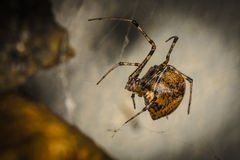Λίγη απειλητική αράχνη Στοκ φωτογραφία με δικαίωμα ελεύθερης χρήσης