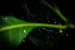 Λίγη αράχνη με τον Ιστό Στοκ φωτογραφία με δικαίωμα ελεύθερης χρήσης