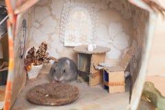 Λίγη αστεία χάμστερ στο κρεβάτι σε έναν μικρό φαντάζεται το σπίτι Στοκ φωτογραφία με δικαίωμα ελεύθερης χρήσης