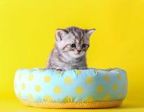 Λίγη γάτα κάθεται στο κρεβάτι Στοκ Εικόνες
