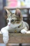 Λίγη γάτα κοιτάζει γύρω Στοκ Εικόνα