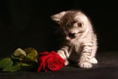 Λίγη γάτα με το κόκκινο αυξήθηκε Στοκ φωτογραφία με δικαίωμα ελεύθερης χρήσης