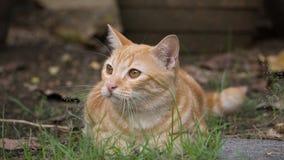 Λίγη γάτα που κοιτάζει στον κήπο στο πρωί Στοκ Εικόνες