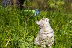 Λίγη γάτα που περπατά στην ψηλή χλόη Στοκ Εικόνες