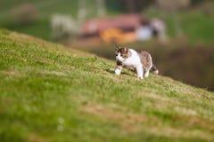 Λίγη γάτα που περπατά στη χλόη Στοκ Εικόνες