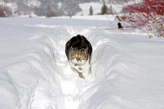 Λίγη γάτα που τρέχει ευτυχώς μέσω του χιονιού Στοκ φωτογραφίες με δικαίωμα ελεύθερης χρήσης