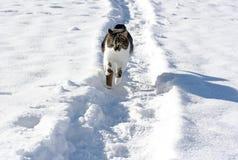 Λίγη γάτα που τρέχει μέσω του χιονιού Στοκ Εικόνες