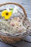 Λίγη γάτα στο ψάθινο καλάθι Στοκ εικόνες με δικαίωμα ελεύθερης χρήσης