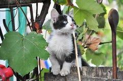 Λίγη γάτα τιγρών Στοκ Φωτογραφία
