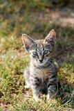 Λίγη γάτα Στοκ φωτογραφία με δικαίωμα ελεύθερης χρήσης