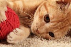 Λίγη γάτα Στοκ Εικόνες