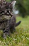 Λίγη γάτα Στοκ Εικόνα