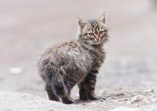 Λίγη γάτα Στοκ εικόνα με δικαίωμα ελεύθερης χρήσης