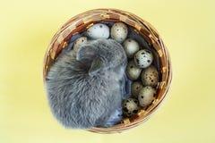 Λίγη γκρίζα συνεδρίαση κουνελιών κοντά στα αυγά ορτυκιών στο καλάθι σε ένα κίτρινο υπόβαθρο Ημέρα Πάσχας στοκ φωτογραφία με δικαίωμα ελεύθερης χρήσης