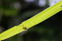 Λίγη ζωηρόχρωμη αράχνη κάτω από τα φύλλα Στοκ φωτογραφία με δικαίωμα ελεύθερης χρήσης