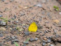 Λίγη κίτρινη πεταλούδα Στοκ φωτογραφία με δικαίωμα ελεύθερης χρήσης