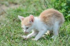 Λίγη κίτρινη χαριτωμένη γάτα παίζει το ψάρι που είναι τα τρόφιμά του στοκ φωτογραφίες