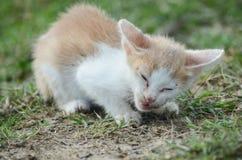 Λίγη κίτρινη χαριτωμένη γάτα τρώει τα ψάρια στοκ εικόνα με δικαίωμα ελεύθερης χρήσης