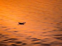 Λίγη κινεζική μύγα πουλιών τσικνιάδων πέρα από τη θάλασσα Στοκ φωτογραφία με δικαίωμα ελεύθερης χρήσης