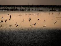 Λίγη κινεζική μύγα πουλιών τσικνιάδων πέρα από τη θάλασσα Στοκ φωτογραφίες με δικαίωμα ελεύθερης χρήσης