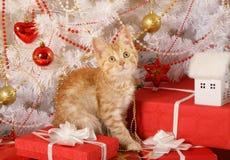 Λίγη κοκκινομάλλης συνεδρίαση γατακιών κάτω από το χριστουγεννιάτικο δέντρο στοκ φωτογραφίες