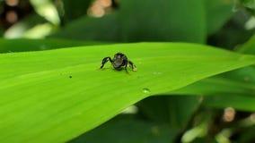 Λίγη μέλισσα στο πράσινο φύλλο απόθεμα βίντεο